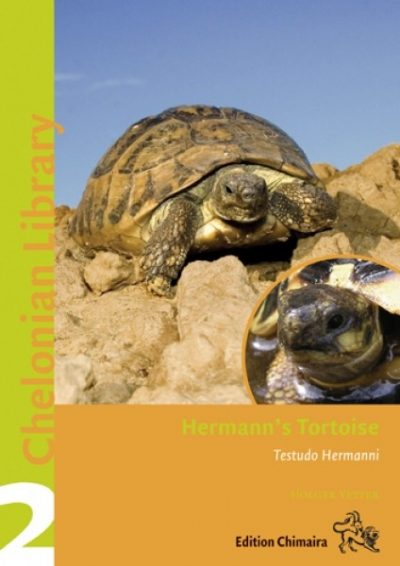 Hermann's Tortoise. Testudo hermanni, T. boettgeri and T. hercegovinensis