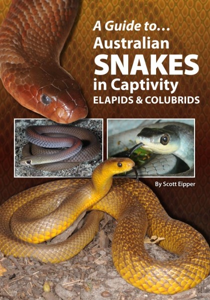 A Guide To Australian Snakes In Captivity—Elapids & Colubrids