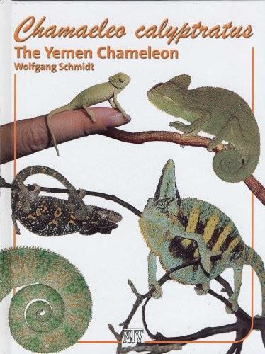 Chamaeleo calyptratus. El camaleón de Yemen