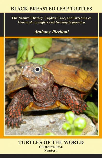Black-Breasted leaf turtles.